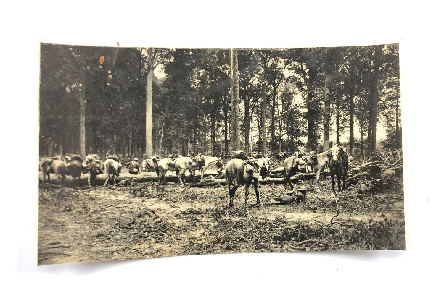 WW1 1918 Western Front Canadian Cavalry Press Photograph.